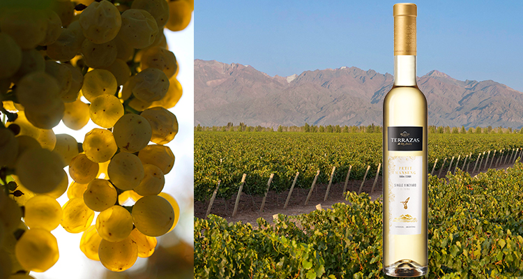Terrazas De Los Andes Single Vineyard Petit Manseng